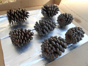Dried Pine Cones Preserve Pizza Box