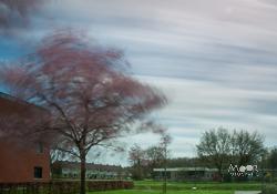 Fotograferen bij veel wind