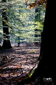 Impressie 2e Workshop Herfstfotografie Mastbos Breda