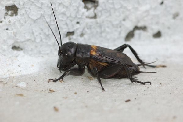 Macrofotografie Oostenrijk Insect