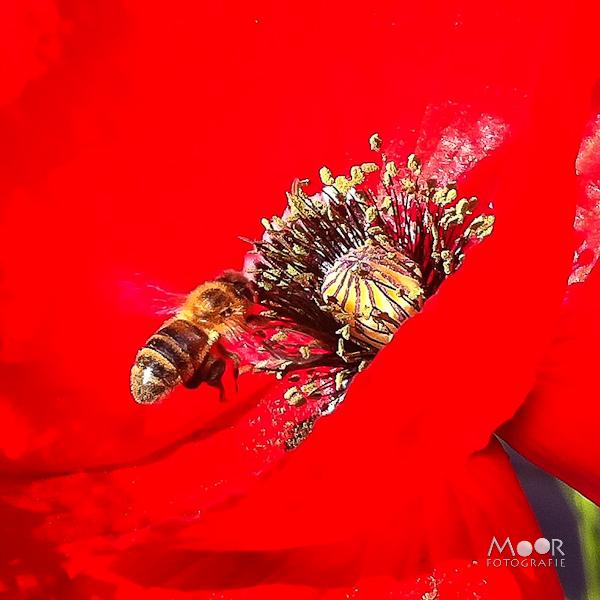 iPhonografie iPhone Foto Macro Veldbloem