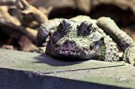 Dagje Reptielen Fotograferen Reptielenhuis De Aarde Breda