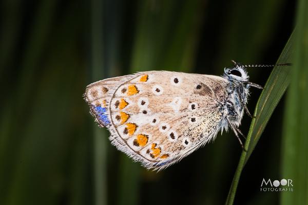 Wondere Wereld van Insecten Macrofotografie