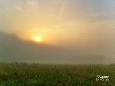 Wondere Wereld van Landschappen in de Mist