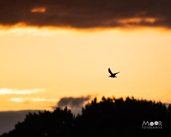 Woordloze Woensdag In Between Meeuw Wolken Zonsondergang