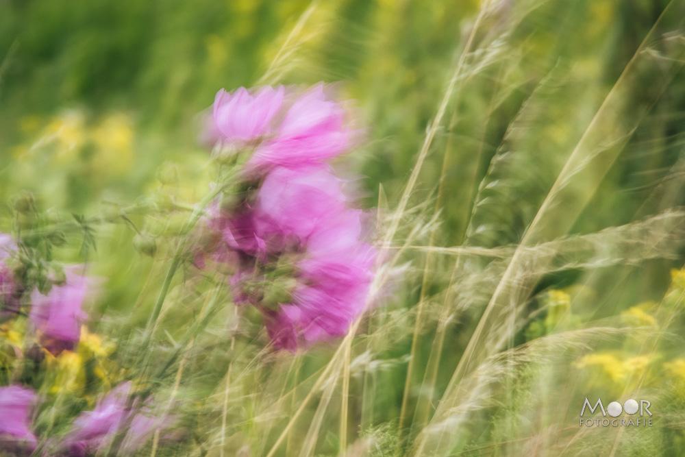 Woordloze Woensdag Winderige Bloemen