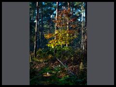 Resultaten Elize Verkroost Workshop Herfstfotografie Mastbos Breda