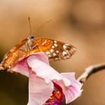 Wondere Wereld van Vlinders