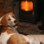 Beagle relaxes by the wood burning stove in the hotel on Rannoch Moor