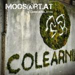 Moosgraffi_Colearning_moosart