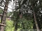 Ferienwoche_Donnerstag_Ausflug_Hochseilpark-4543