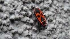 Insekten-Fest (10 von 12)