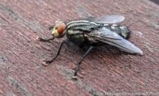 Insekten-Fest (11 von 12)