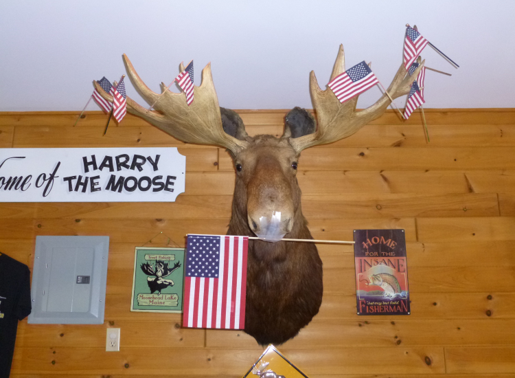 Moose Greenville Maine