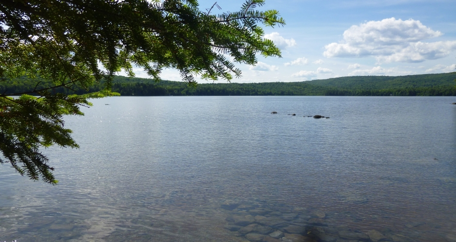 Loon Landing Wilson Pond