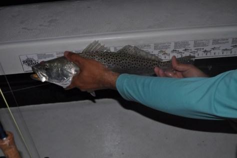 Chris' 20+ inch Sea Trout.