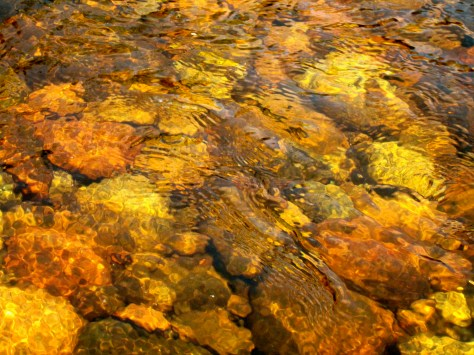 Tea color water of the Adirondacks comes from the decaying vegetation and leaves.