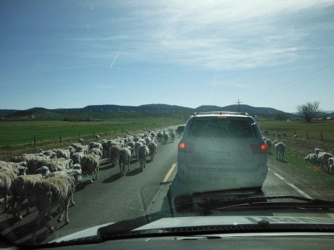 Traffic jam in route to the fishing