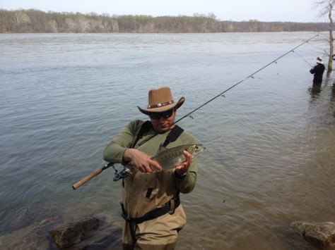 Hickory Shad grow to around two pounds, American Shad grow to four. This is a larger Hickory Shad.