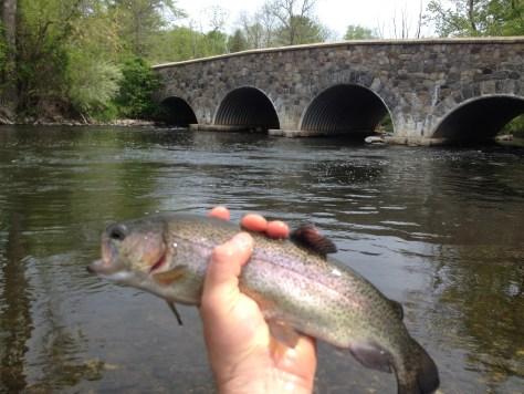 Same spot trout