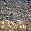 What Happens With Big Winds?