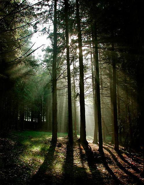 Sunlight Trees