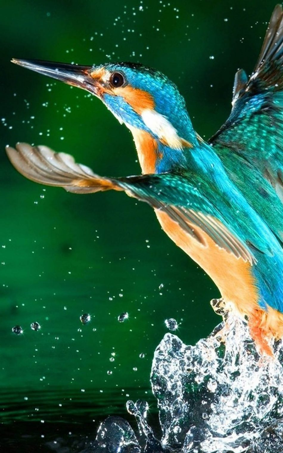 Download Kingfisher Bird Free Pure 4K Ultra HD Mobile