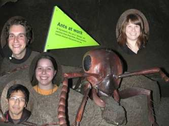 Ants at work – April 2009