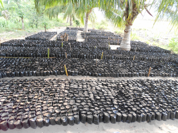 Arranged poly grower bags filled with compost in Srohume Village