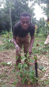 APENTENG BROTHER HELPING WITH TREE PLANTING ON THIER FARM