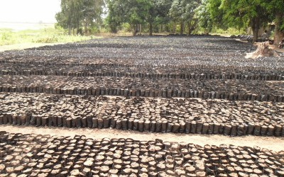Photos: Another MORE Agroforestry Nursery