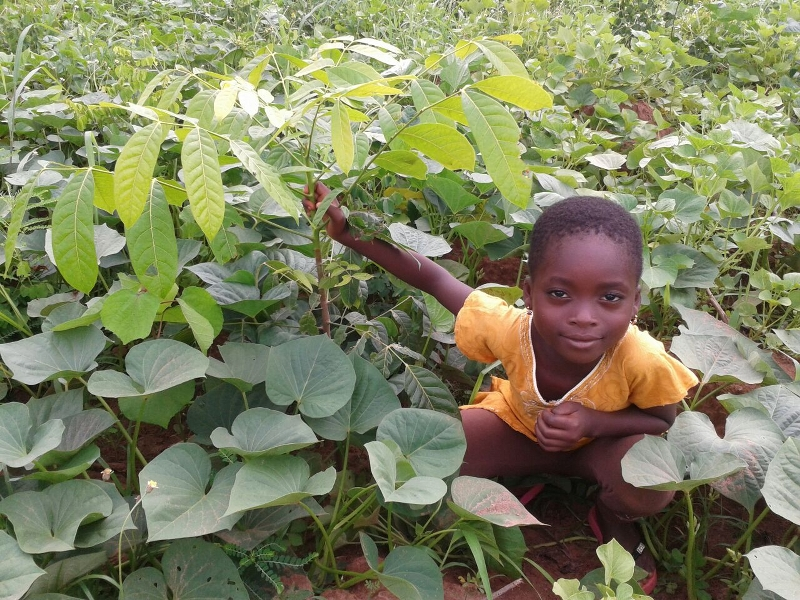 DAVID'S DAUGHTER WITH SWIETENIA TREE WITH POTATOES GROWING UNDER AS MULCH AND FOOD