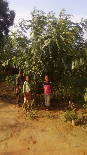 jerry-children-with-cassia-planted-at-home-for-shade