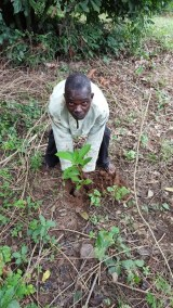 MAXWELL AWUKU PLANTING HIS TREE