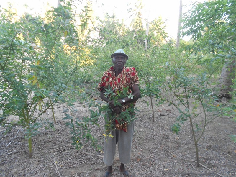 WILLIAM AMONG  HIS PIGEON PEA TREES