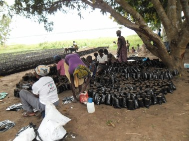 WOMEN FILLED BAGS WITH COMPOST AND THIS BAGS WILL BE GERMINTED TO GERMINATED SUSTAINABLE INCOME IN THE FUTURE