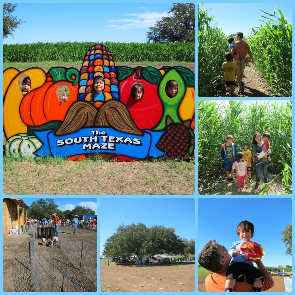 South Texas Maize review