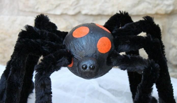 eyes spider