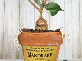 Make your own Mandrake inspired by Herbology 101 from the Harry Potter books!
