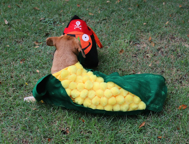 hilarious dog pet costume