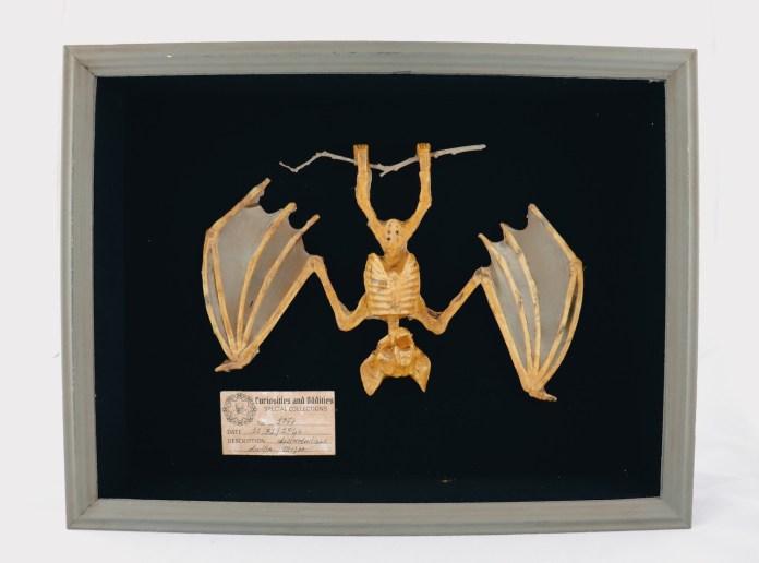 mummy bat DIY halloween specimen decor