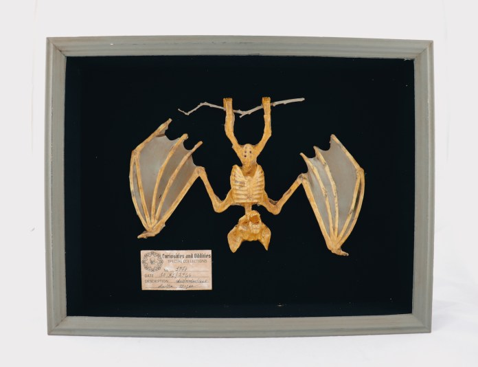 mummified bat DIY halloween specimen decor