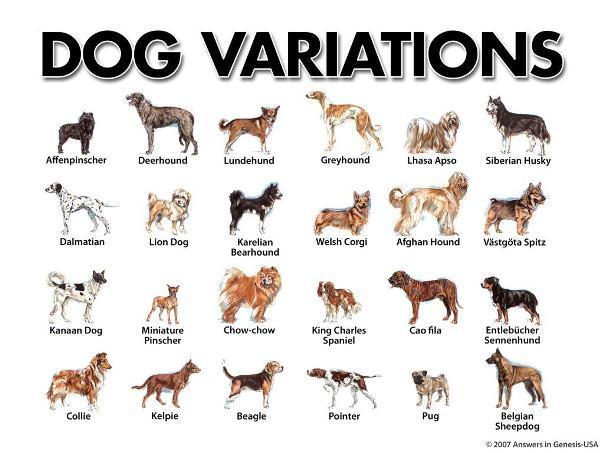 dog-variations