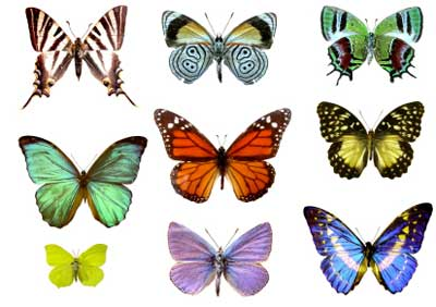butterfly-color-butterflies