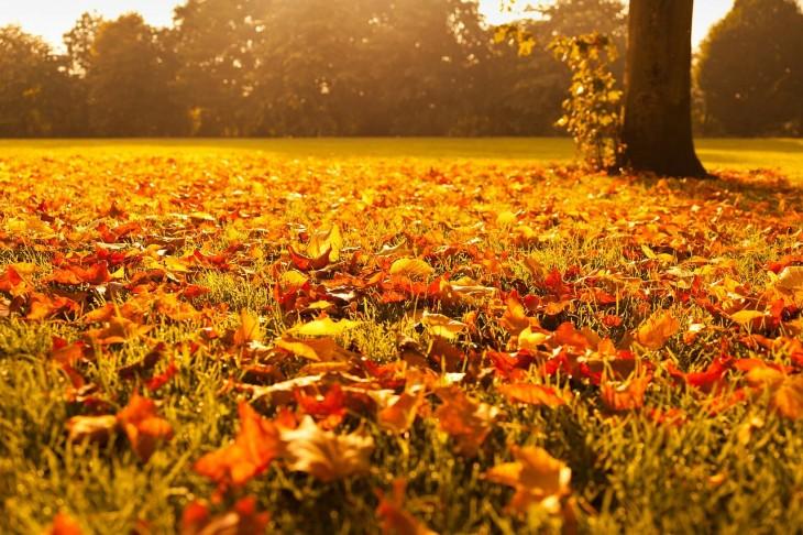 autumn-72736_1280-730x486