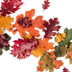 A flat lay of autumn leaves on a white background