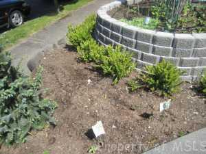 garden 002