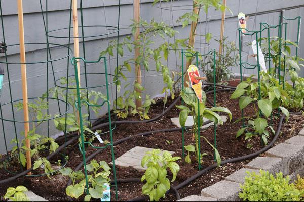 garden 040