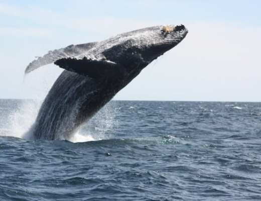 WHALE-WATCHING IN CABO