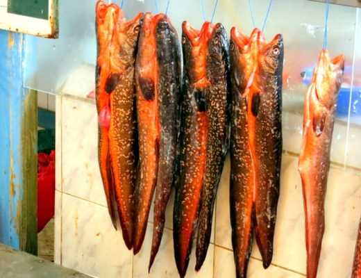 Fish hanging at the Coquimbo Fish Market